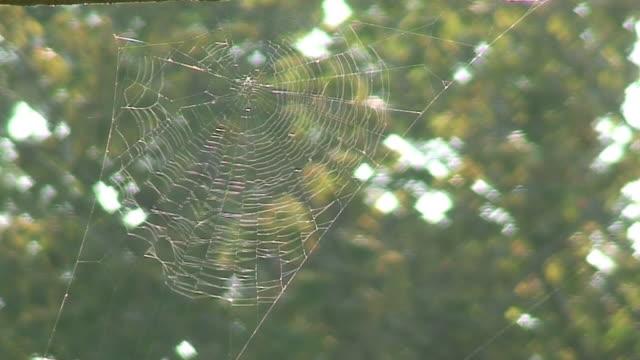 orb web - arachnophobia stock videos and b-roll footage