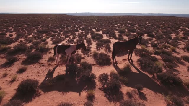 orbit low around beautiful horse wild horses, drone aerial 4k, monument valley, valley of the gods, desert, cowboy, desolate, mustang, range, utah, nevada, arizona, gallup, paint horse .mov - paint horse stock videos & royalty-free footage
