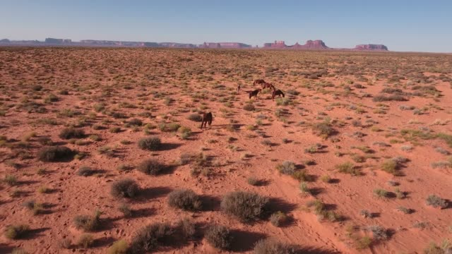 orbit pull away wild horses, drone aerial 4k, monument valley, valley of the gods, desert, cowboy, desolate, mustang, range, utah, nevada, arizona, gallup, paint horse .mov - paint horse stock videos & royalty-free footage