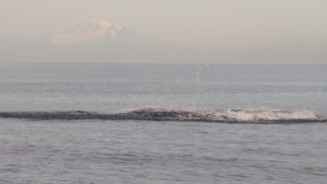 orca breaches and swims with snowy mountains in distant background - animal fin stock videos & royalty-free footage
