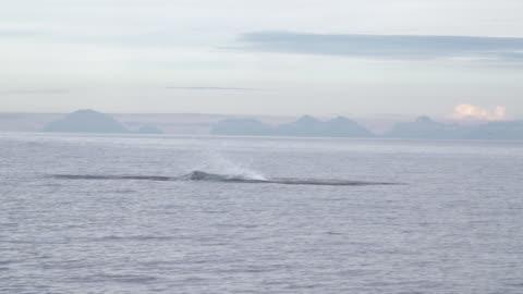 stockvideo's en b-roll-footage met orca jumping out of ocean in lofoten archipelago - dolfijn