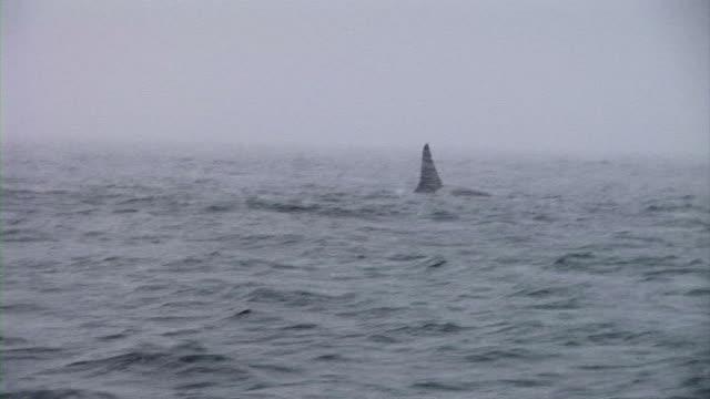 HD: Orca