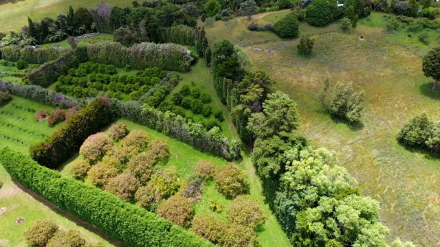 orchard, countryside, trees, panorama, sea, landscape coromandel, nz - dronebase stock videos and b-roll footage