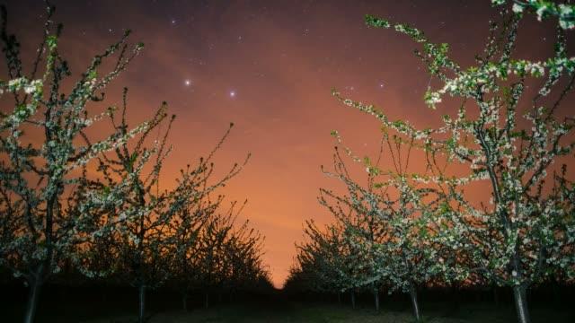 orchard in twilight, baranja, croatia - blossom stock videos & royalty-free footage