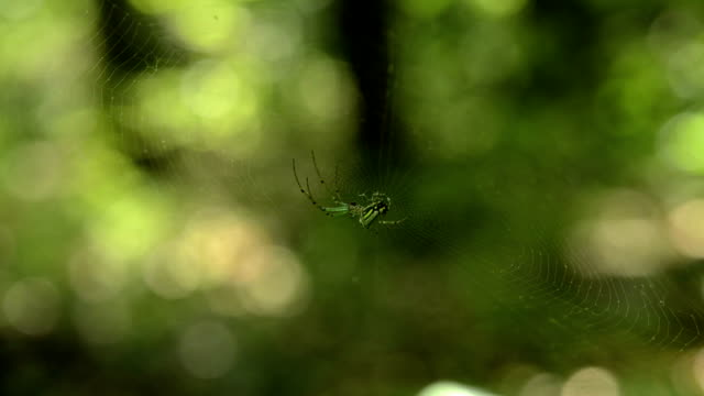 orchard spider hanging out - soft focus stock videos & royalty-free footage