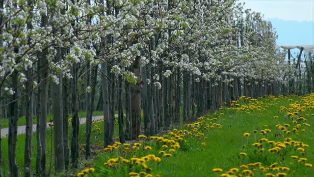 vídeos de stock, filmes e b-roll de orchard - pomar