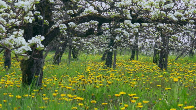 orchard - orchard stock videos & royalty-free footage
