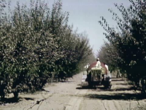vídeos y material grabado en eventos de stock de montage orchard worker on tractor pulling wind machine between the rows shaking the trees / sebastopol, california, united states - árbol de hoja caduca