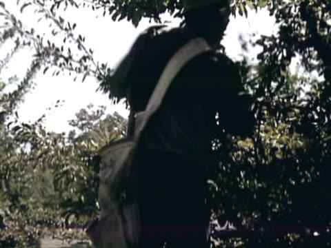 vídeos y material grabado en eventos de stock de montage orchard workers picking prunes by hand and dumping the prunes into crates / sebastopol, california, united states - árbol de hoja caduca