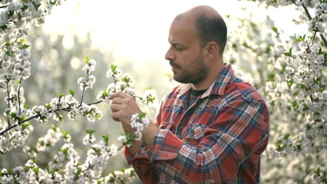 orchardman - obstgarten stock-videos und b-roll-filmmaterial
