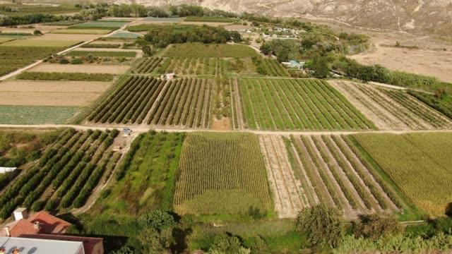 vídeos de stock e filmes b-roll de orchards as seen from above - alface
