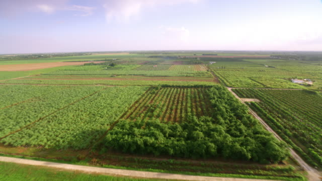 aerial orchards in florida in sunshine - orchard stock videos & royalty-free footage