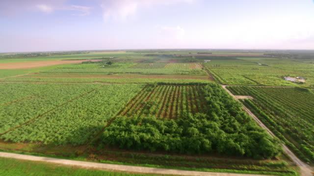 vidéos et rushes de aerial orchards en floride en plein soleil - verger