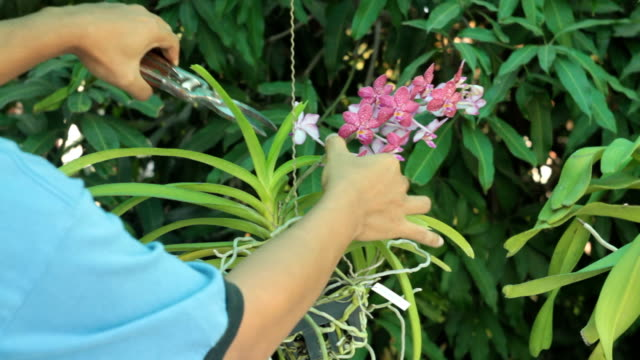 orchid cut - orchid stock videos & royalty-free footage