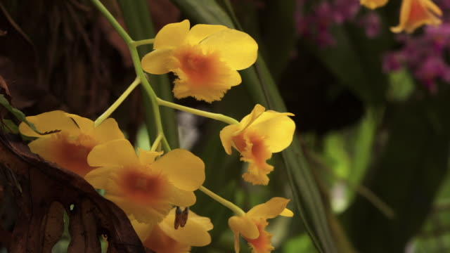 tl orchid flowers open, uk - orchid stock videos & royalty-free footage