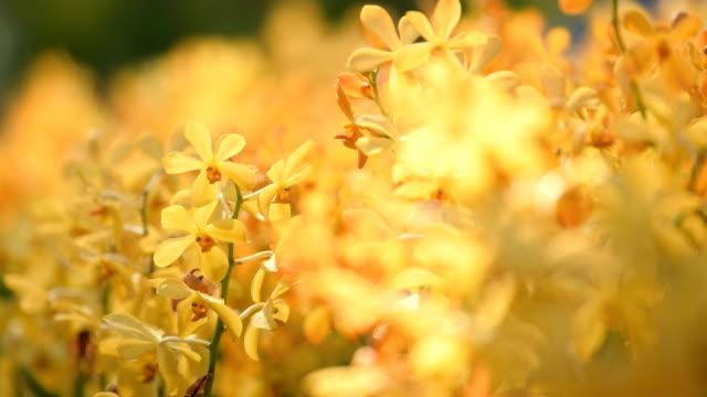 vídeos y material grabado en eventos de stock de orquídea en el jardín. concepto enfoque de cambio - tilt shift