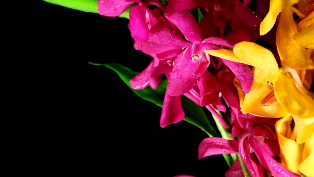 orchid on the wind - tropical flower stock videos and b-roll footage