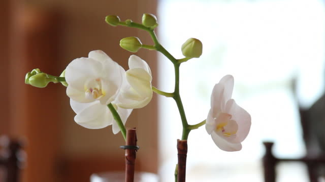 orchid plant - houseplant stock videos and b-roll footage