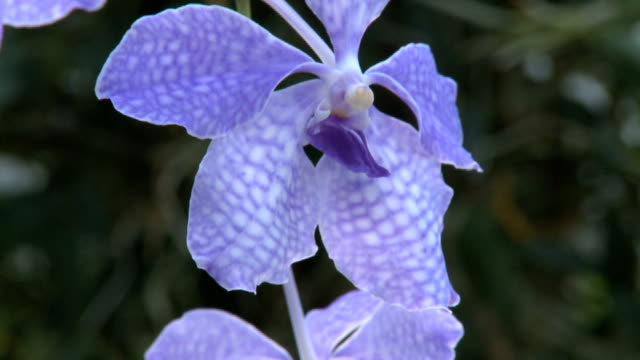 orchid - plant bulb stock videos & royalty-free footage