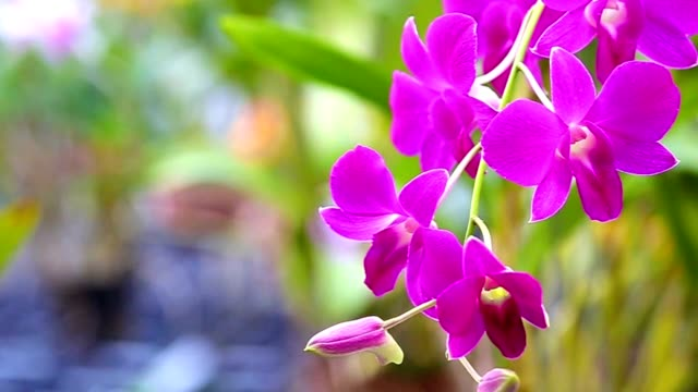 orchid - orchid stock videos & royalty-free footage