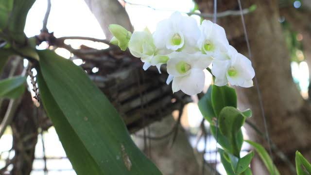 Orchids flower shaking by wind