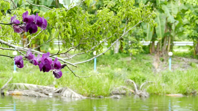 Orchids on Tree