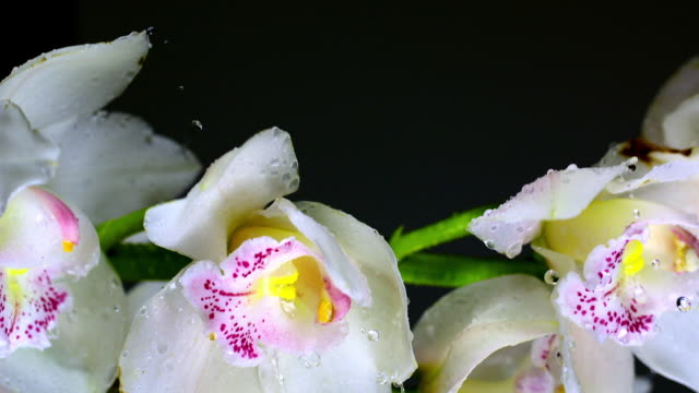 Orchids with stem rotating in high speed producing splashing water