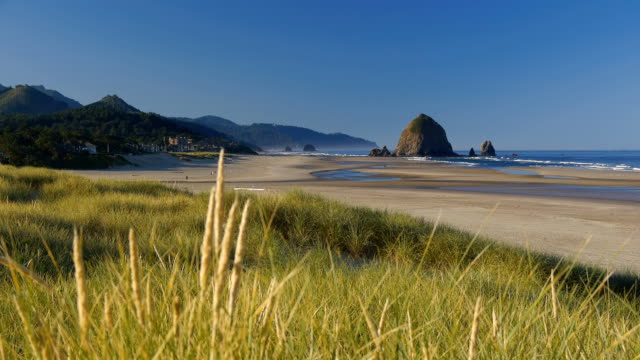 stockvideo's en b-roll-footage met hd oregon coast - oregon coast
