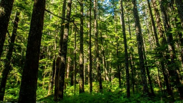 オレゴンの森