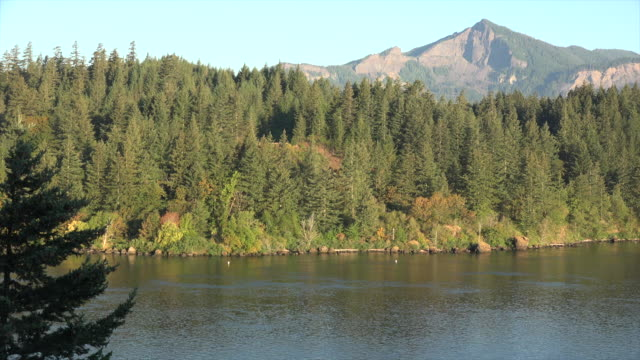 oregon forested island and mountain - columbia river gorge stock videos & royalty-free footage