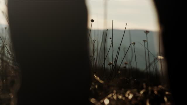 oregon hiker - människolem bildbanksvideor och videomaterial från bakom kulisserna