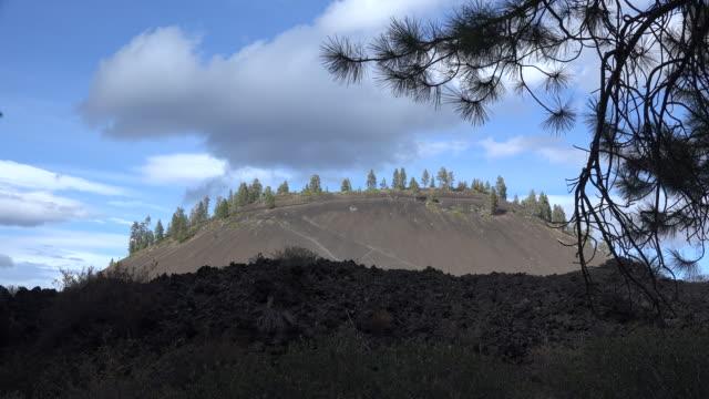 oregon pine branch frames lava butte - kegel stock-videos und b-roll-filmmaterial
