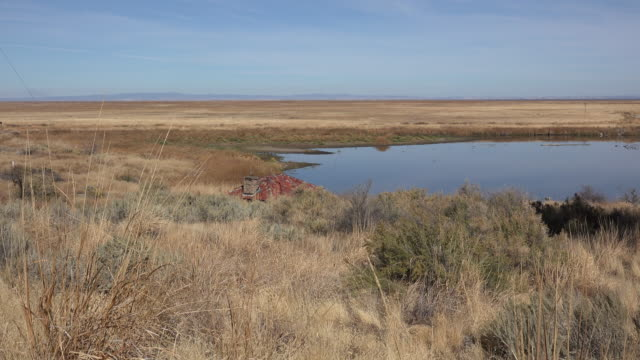 36 Malheur National Wildlife Refuge Video Clips & Footage