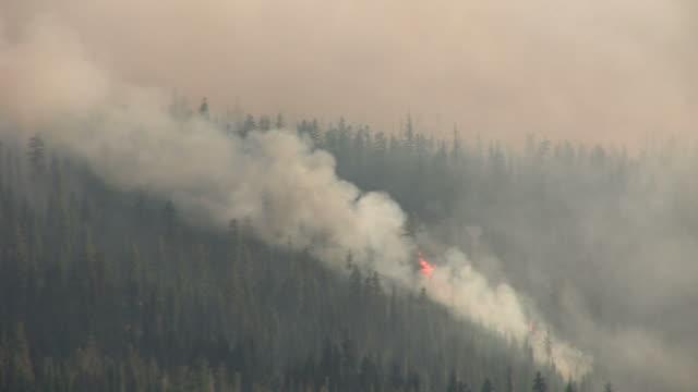 oregonforest fire in oregon pacific northwest united states - オレゴン州点の映像素材/bロール
