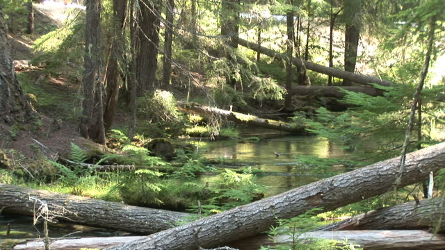 oregonumpqua national forest and view of a stream in oregon pacific northwest united states - umpqua national forest stock videos & royalty-free footage