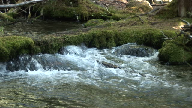 oregonview of a stream in oregon coast pacific northwest united states - umpqua national forest stock videos & royalty-free footage