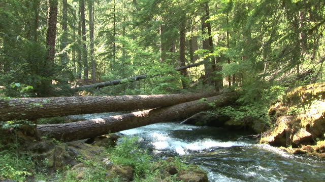 vídeos de stock, filmes e b-roll de oregonview of a stream in oregon pacific northwest united states - sequoia sempervirens