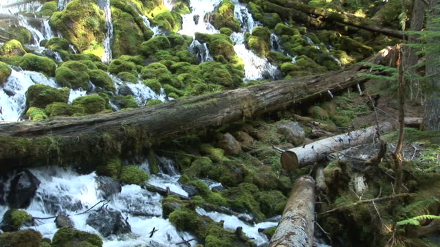 oregonview of a stream in umpqua national forest oregon pacific northwest united states - umpqua national forest stock videos & royalty-free footage