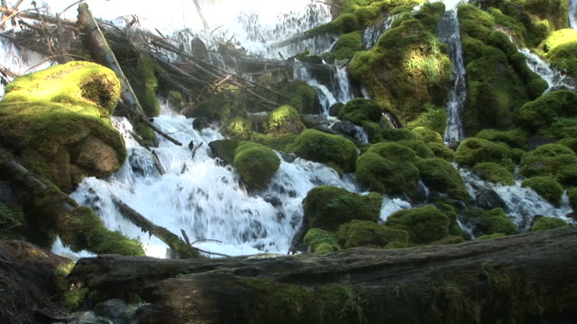 oregonview of forest stream in oregon pacific northwest united states - umpqua national forest stock videos & royalty-free footage
