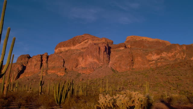 Organ pipe cacti grow at the foot of red cliffs in the Sonoran Desert.