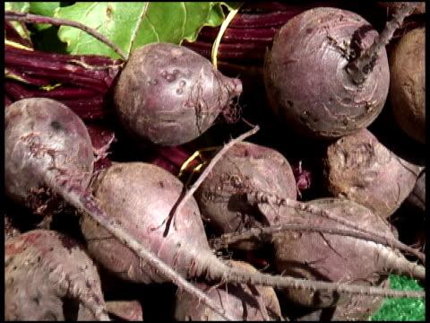 vídeos y material grabado en eventos de stock de beets orgánicos, remolacha, suizos acelga - vegetal con hoja