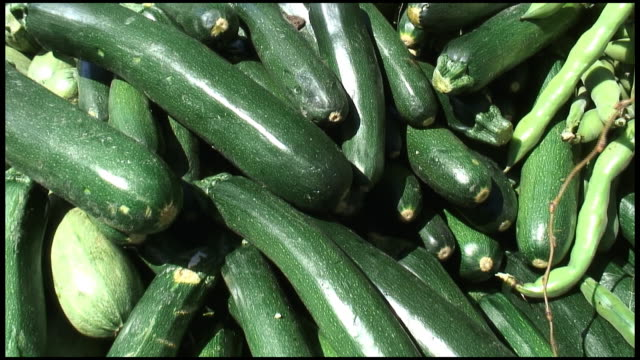 hd: organic courgette, zucchini, italian or marrow squash - courgette stock videos and b-roll footage