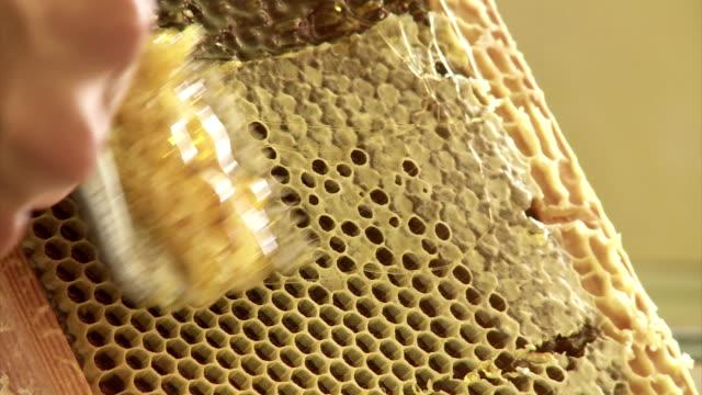 Organic extraction of honey