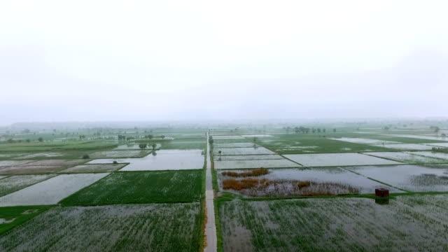 Organic farm in rainy season