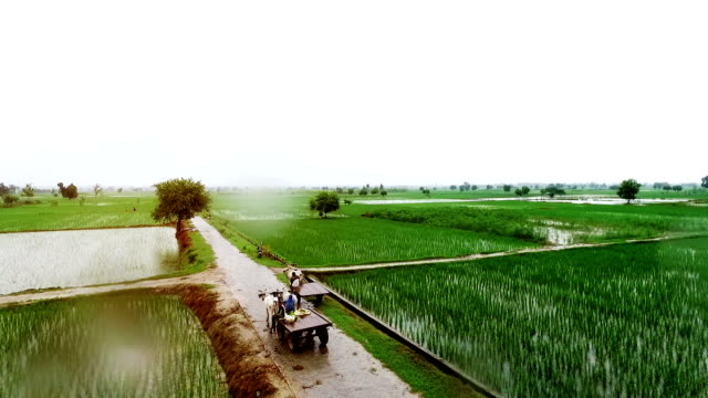 organic farm in rainy season - india video stock e b–roll
