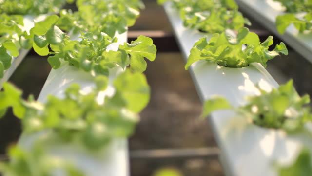 vidéos et rushes de ferme biologique avec culture végétale hydroponique - 10 seconds or greater