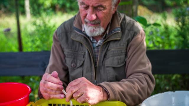 organic farmer husking bean pods - husking stock videos & royalty-free footage