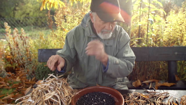 organic farmer - husking stock videos & royalty-free footage