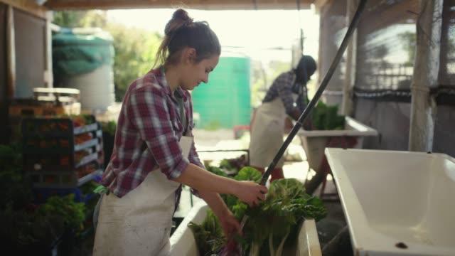 ökologischer landbau ist eine win-win-situation - nachhaltige lebensweise stock-videos und b-roll-filmmaterial