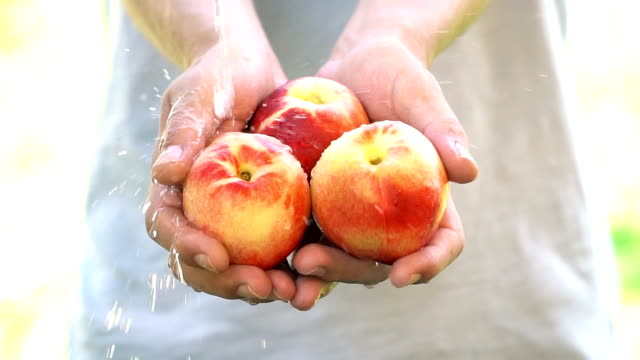 Organic fruit and vegetables. Farmer hands with freshly harvested fruit and vegetables. Peach - Slow Motion